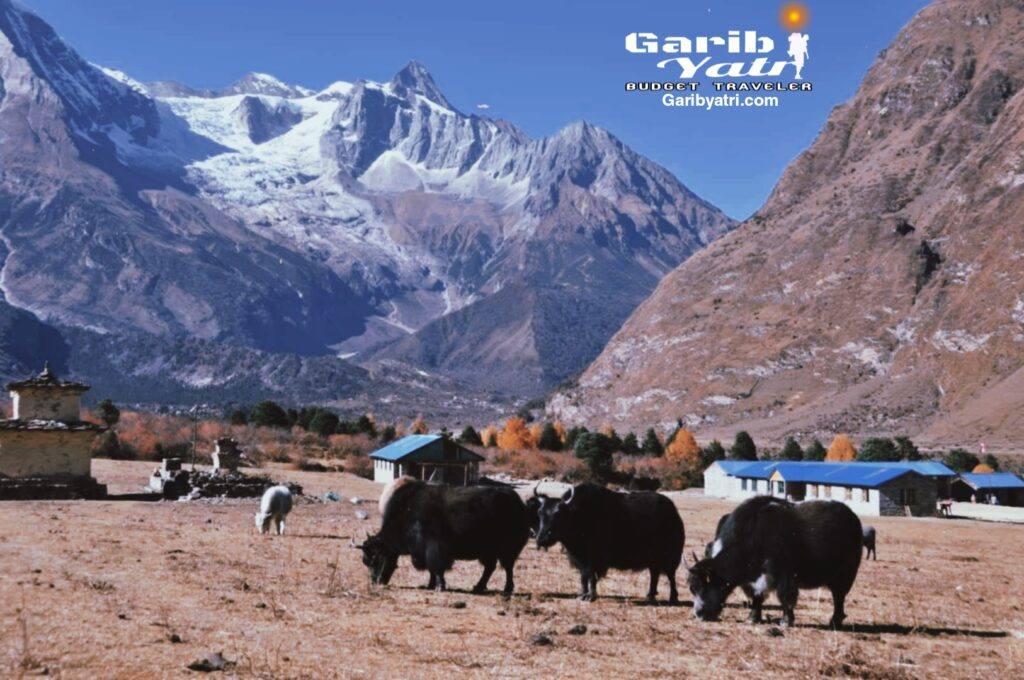 langtang nepal , annapurna region trek in nepal