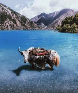 tsho rolpa lake, tilicho lake of nepal